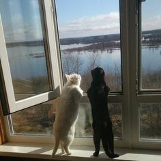 ❤️ =^.^= CÅt§ in The Window ❤️