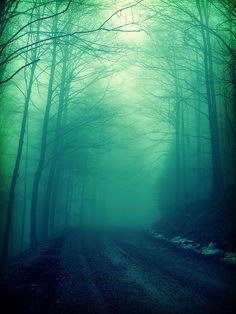 Aqua fog ... silhouetted tree-lined road ... by Annadriel on flickr  #turquoise #teal