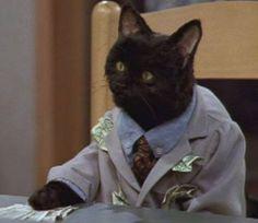 47 Reasons Salem From 'Sabrina The Teenage Witch' Is Your Spirit Animal Salem Sabrina, Salem Cat, Salem Saberhagen, Cat Memes, Funny Memes, Funny Cats, Funny Animals, Your Spirit Animal, Sabrina Spellman