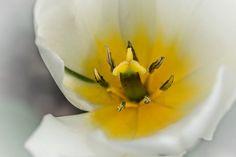 2015.04 Garten