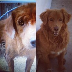 When Rufus first came into Leigha Marie Gonzales life a few years ago, he was badly beaten and neglected, but look at what a little care and lots of love can do.