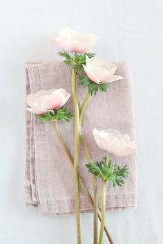 Ideas for wedding flowers peonies texture Fresh Flowers, White Flowers, Beautiful Flowers, Spring Flowers, Pastel Flowers, Simple Flowers, Diy Flowers, Pastel Pink, Deco Nature