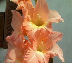 Essa flor é muito linda e tem muitas outras cores.