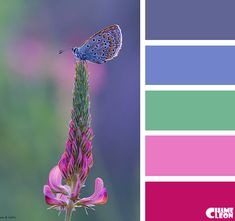 Color Palette, wild flowers, butterfly, magenta, lilac.
