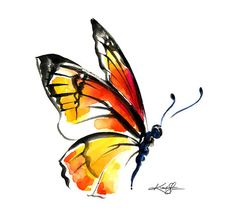 Monarch No. 3 ... Canvas Art Print . from Original butterfly watercolor painting by Kathy Morton Stanion  EBSQ