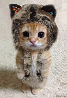 OMG a kitty wearing a hat with kitty ears