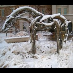 Horse on TTU campus in front of Murray Hall. The mascot of Cohort 2, Higher Ed class of 2014.