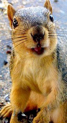 Happy!!! << Today's dose of squirrel cuteness! #waitingforRedsandGrays