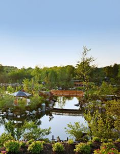 Take a meditative stroll, tuning in to sensations—the smell of bamboo, the brush of a branch, the sound of gravel underfoot. Eastern Redbud, Lily Bloom, Michigan Travel, Public Garden, Tropical Vibes, Water Lilies, Water Garden, Botanical Gardens, Oasis