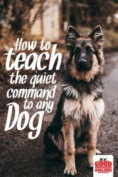 Some dogs bark a lot. Find out how you can stop dog barking by teaching your dog the quiet command with these easy dog training tips. #dogs #dogtraining #barking