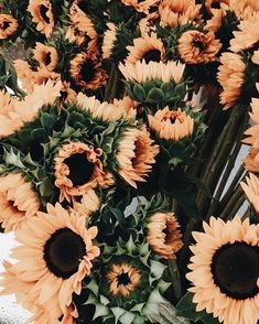 New Ideas For Plants Wallpaper Iphone Beautiful Flowers Aesthetic Iphone Wallpaper, Aesthetic Wallpapers, Artsy Wallpaper Iphone, Cute Wallpapers, Wallpaper Backgrounds, Floral Wallpapers, Trendy Wallpaper, Wallpaper Plants, Iphone Wallpapers