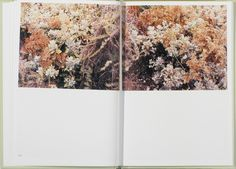 In Our Nature. Photographs by Takashi Homma #4