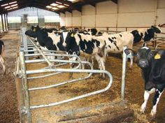 IAE Young Stock Cubicles