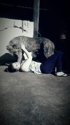 Let me love you! Our Wolfie girl Banshee loving Maddi.