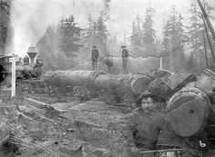 Logs on railroad cars being pushed by locomotive engine c1900