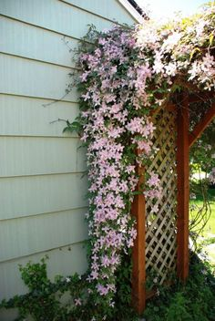 Name That Plant Clematis trellis. I like the idea of a lush climbing flowering vine over a trellis t Climbing Clematis, Clematis Trellis, Climbing Flowers, Climbing Vines, Outdoor Plants, Outdoor Gardens, Garden Plants, Clematis Montana, Flowering Vines