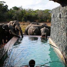 Elephants - North Uthungulu, South Africa  #travel #animal #nature