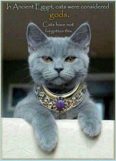 In Ancient Egypt, cats were worshipped. ...