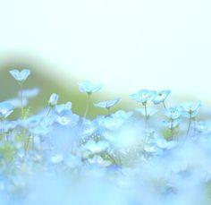 ♔  soft, nostalgic flowers