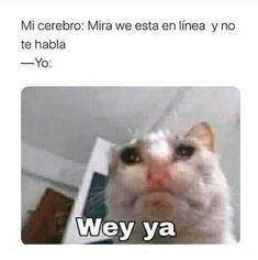 Read Memes 32 from the story Memes by ) with 6 reads. Funny Spanish Memes, Spanish Humor, Stupid Memes, Funny Memes, Funny Cats, Funny Animals, Best Memes, Kawaii Anime, Funny Pictures