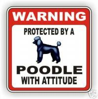 Poodles with attitude