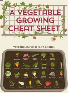 Her er en super køkkenhave guide til dig, der er nybegynder eller amatør i køkkenhaven. Print den og hæng den op på køleskabet som reference.