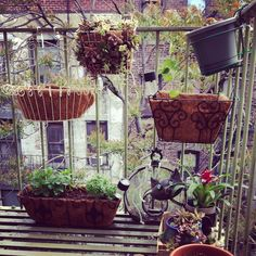 Fire escape garden #nyc #urban #gardening