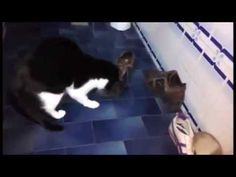 """Maia: """"I love playing with shoelaces!"""" :-D - YouTube"""