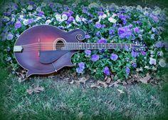 Gibson Mandocello in Purple Flowers #Mandolin #Mandola #Mandocello