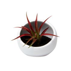 Classic tabletop planter re-imagined as a small terrarium with a modern ceramic finish. The perfect modern planter for creating a captivating interior home environment.