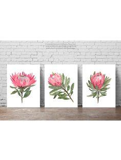 Protea Botanical Illustration set 3 Canvas Painting, Large Floral paper Flower Decoration, Pink Green Modern Room Art Print, Flowers Poster