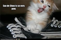 I can imagine how smelly that shoe is when I look at your face. You don't need to say it aloud you strange cat