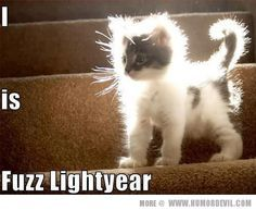 Cats always seem to provide a needed laugh. Sometimes sly but always adorable. Fuzz lighter! Funny kitten!