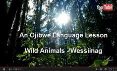 Wessiinag-Wild Animals