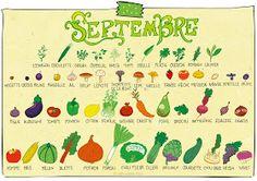 pissenlit: Septembre - Calendrier des fruits et légumes