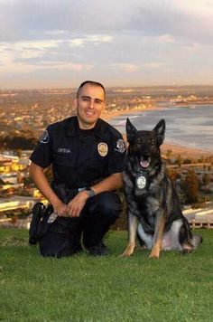 Ventura Police Department K9 Flix Von Haus Vortkamp and officer Jack Ortega .   .........K9 Heroes shared Inglis Police Dog Academys photo.