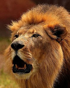 .King of the Jungle.
