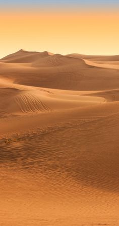 Dubai desert safari. What to know before experience a great/evening in the desert. UAE.