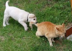 You may think it's impossible to have a dog and a cat living in harmony in the same household. But it can be done.