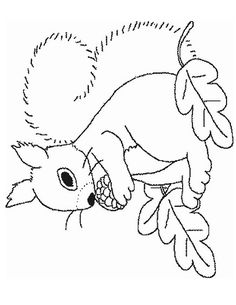Coloriage Écureuil à colorier - Dessin à imprimer Animal Coloring Pages, Colouring Pages, Animal Skeletons, Turtle Pattern, Primitive Patterns, Wool Applique, Pictures To Draw, Rug Hooking, Fall Crafts