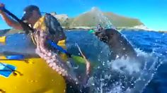 """New Zealand kayak session becomes scene of unlikely """"seal slaps man with octopus"""" tale. Funny Animal Memes, Funny Animal Videos, Funny Animal Pictures, Cute Funny Animals, Funny Cute, Funny Jokes, Hilarious, Nature Animals, Animals And Pets"""