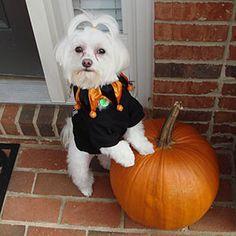2010 Halloween Pet Parade | Jester | SouthernLiving.com