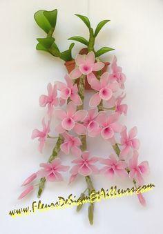 Orchidée Dendrobium Anosmum