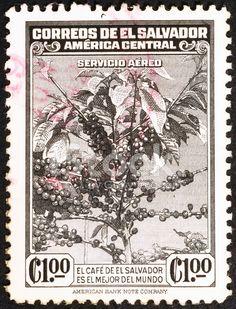 Nice coffee tree on old bicolor postage stamp of El Salvador