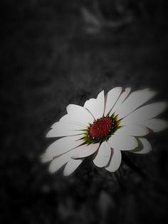 Fiore visto dal lato oscuro