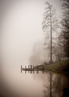 A hush, mysterious mist, misty, beauty of Nature, trees, water, reflection, peaceful, silence, solitude, photo