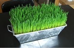 Grass centerpiece - with baseballs on top ?? Easy DIY and can be purchased from craft suppliers