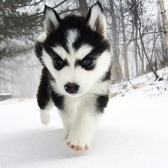 The Best Puppies - Dog Pics - Puppy Photos - Best Dog Funny Pictures Cute Little Animals, Cute Funny Animals, Funny Dogs, Cutest Animals, Funny Humor, Boy Dog Names, Corgi Husky, Pomeranian Puppy, Teacup Chihuahua