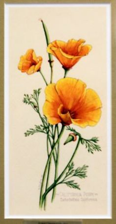 California Poppy by Ernest Clayton, now on display at the Helen Crocker Russell Library of Horticulture in San Franciscos Botanical Garden at Strybing Arboretum. Photo: Lance Iversen, The Chronicle