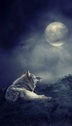 "Good Night!   (no words - ""Wolf and full moon."")"